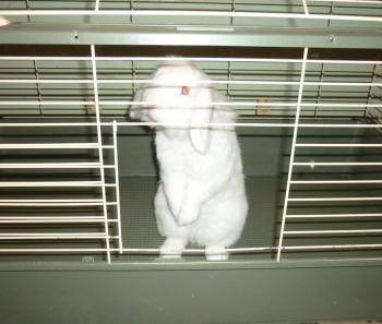 Отдам в заботливые руки кролика - Миха1.jpg
